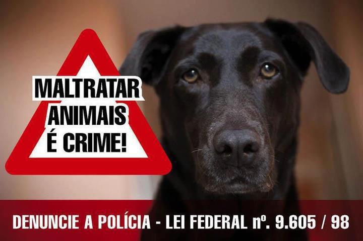 Resultado de imagem para Site da SSP recebe denúncias de maus-tratos contra animais